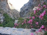 Flowering shrubs and gray rocks