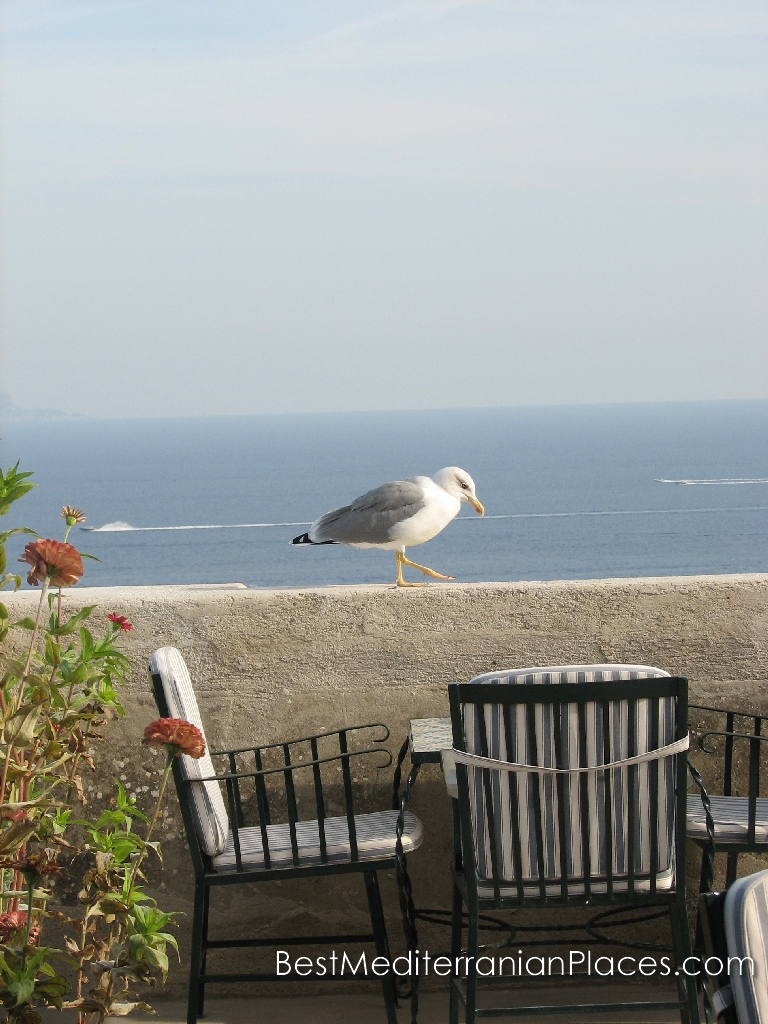 Seagull waiting for treats from visitors to the cafe in the castle
