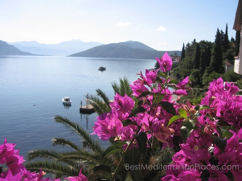 Flowering bougainvillea on a background of Kotor Bay makes an unforgettable impression