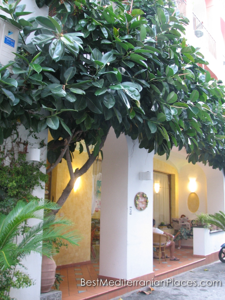 Green roof canopy of ficus over the entrance to the hairdresser