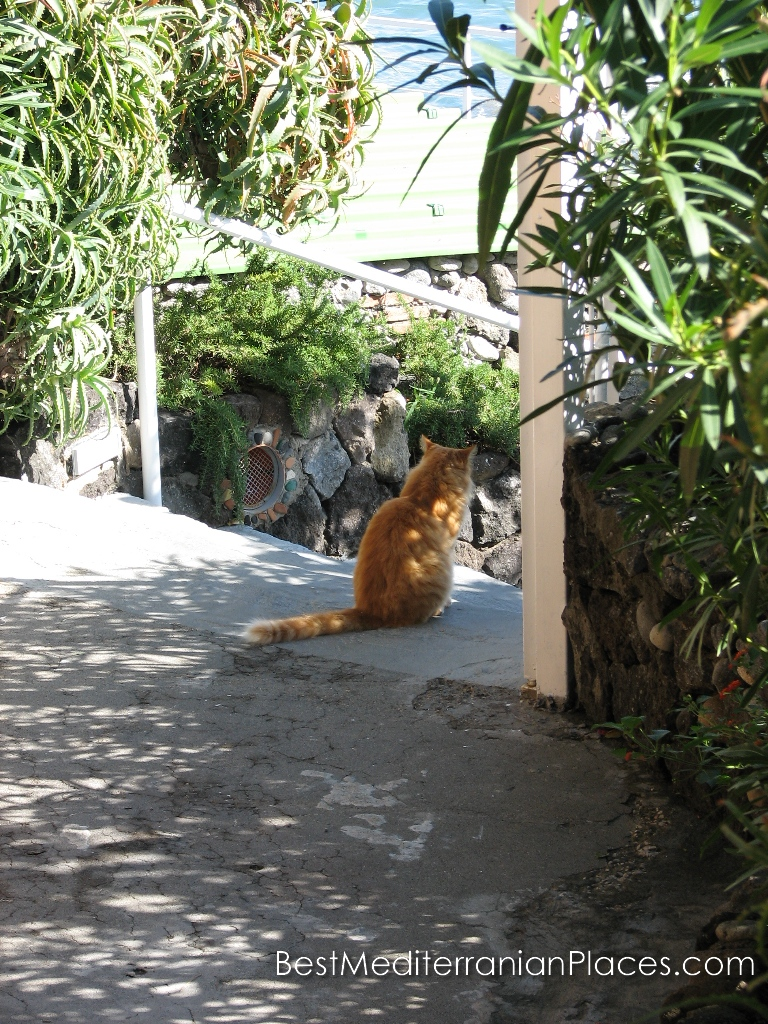 Residence ginger cat with a sea view
