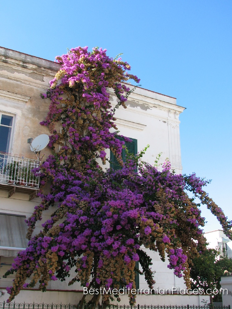 Bougainvillea always on top, and decorates the wall of the old house