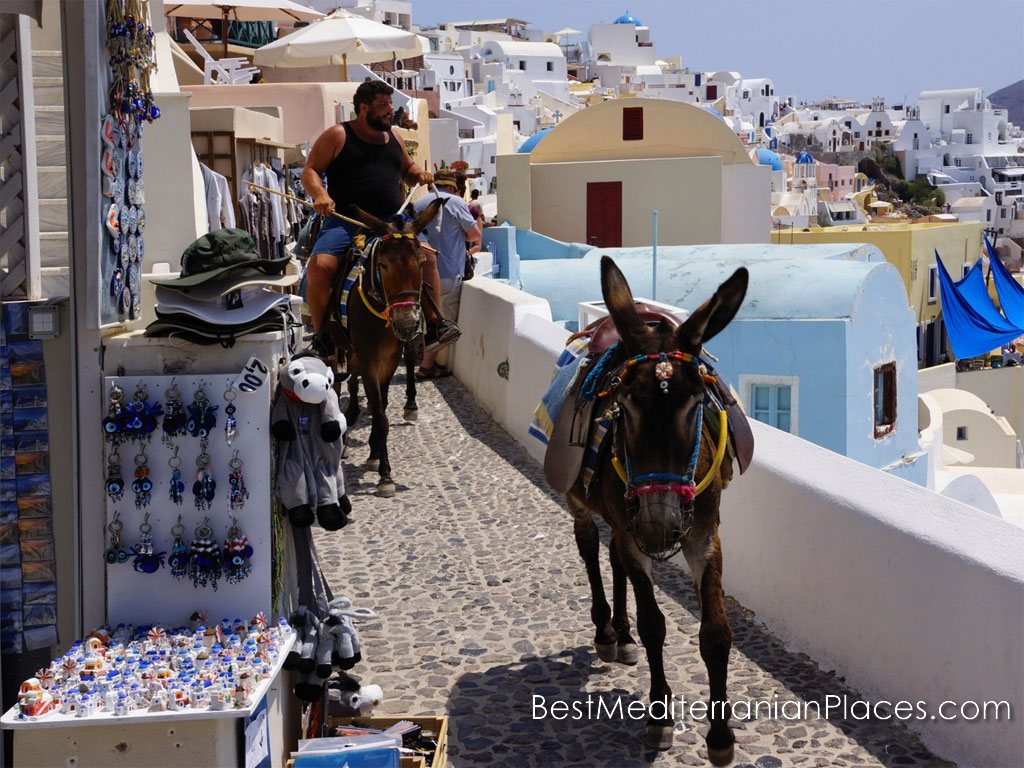 Donkeys carry about food and water to homes and hotels in the Oia