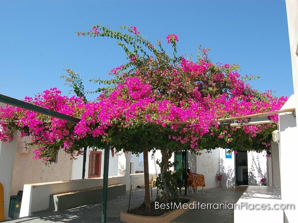 A cozy patio for rest in the shade of bougainvillea