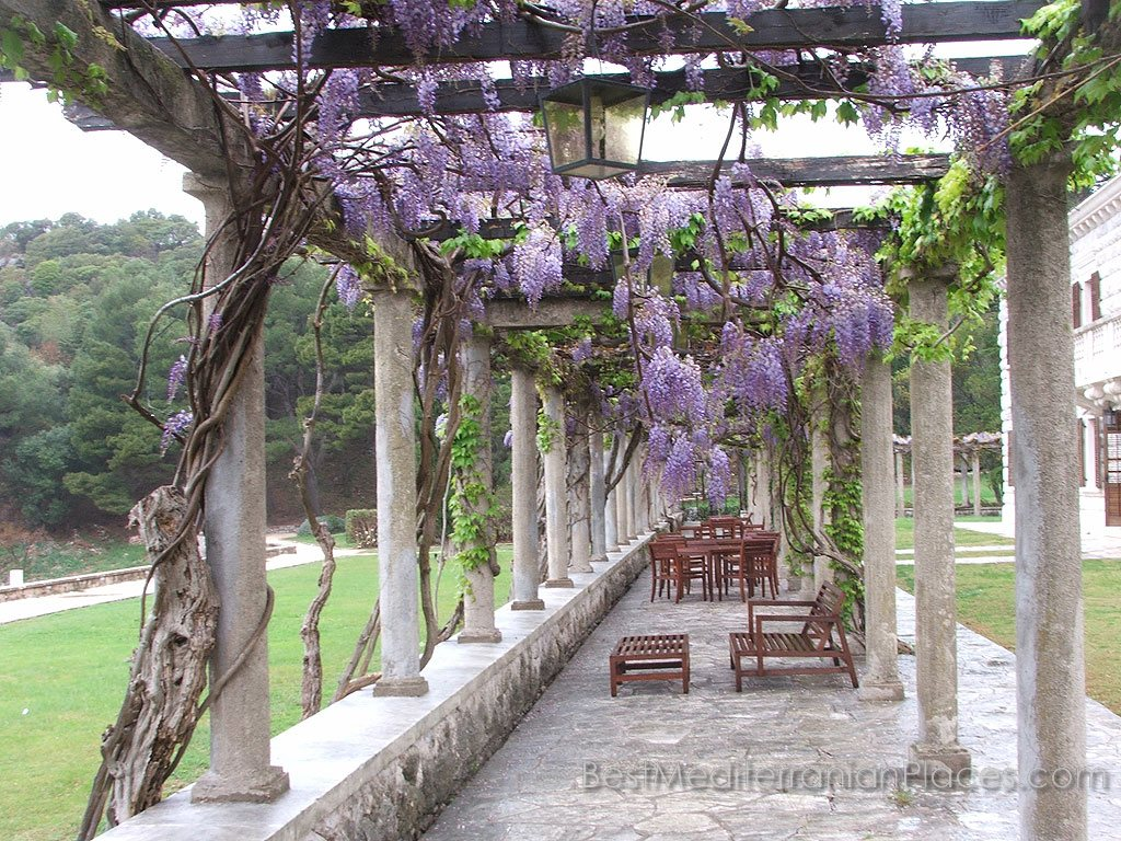 Flowering vines picture very similar to the plant from the rock wisteria.