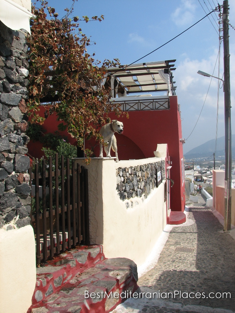 A dog is on the wall greets visitors