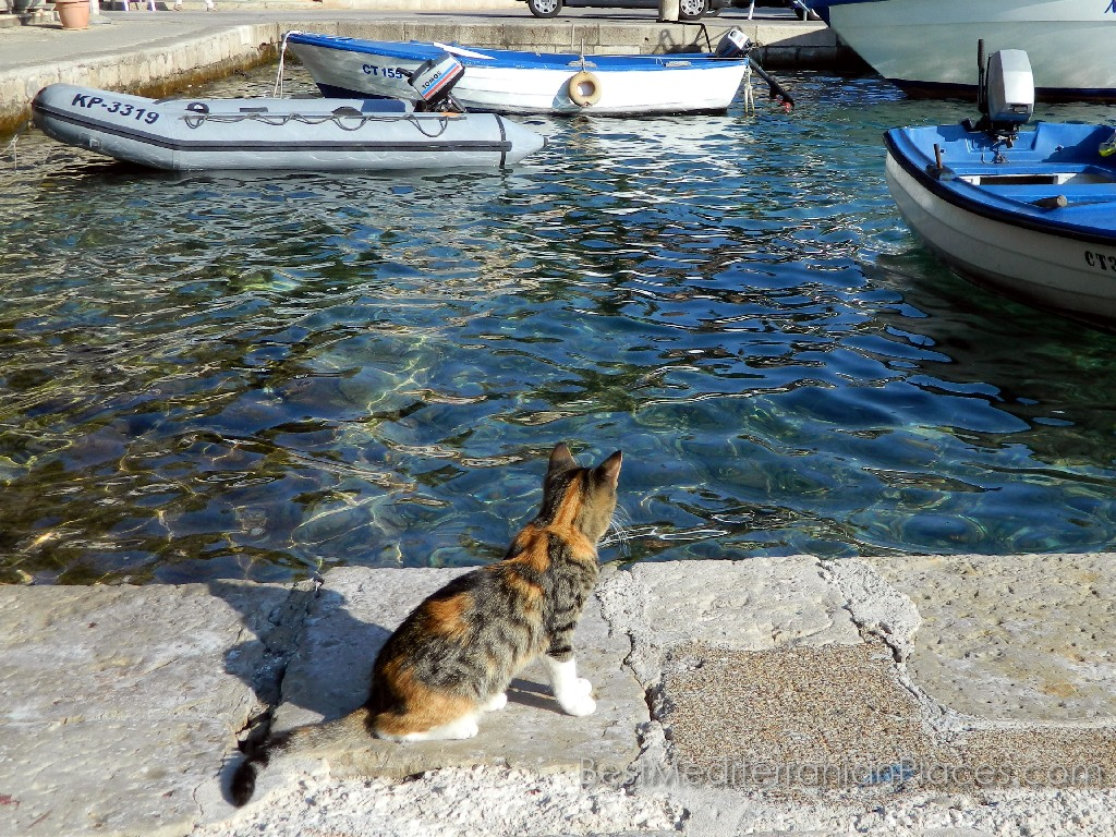A hungry cat is waiting for his master to go fishing, to feast on the fresh catch
