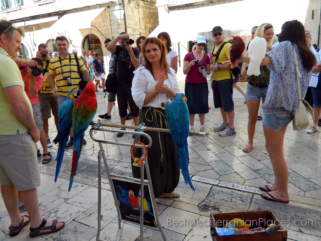 Dubrovnik Parrots predict the fate of the tourists and earn their livelihood